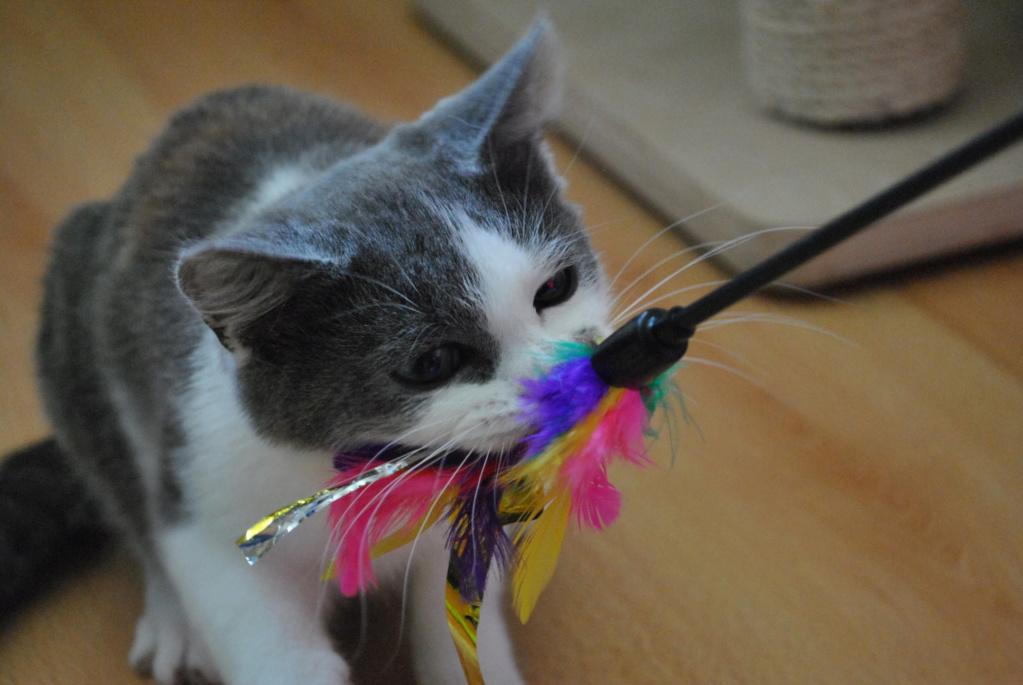 Odette ( ex Odin), chaton de deux mois et demi Dsc_0018