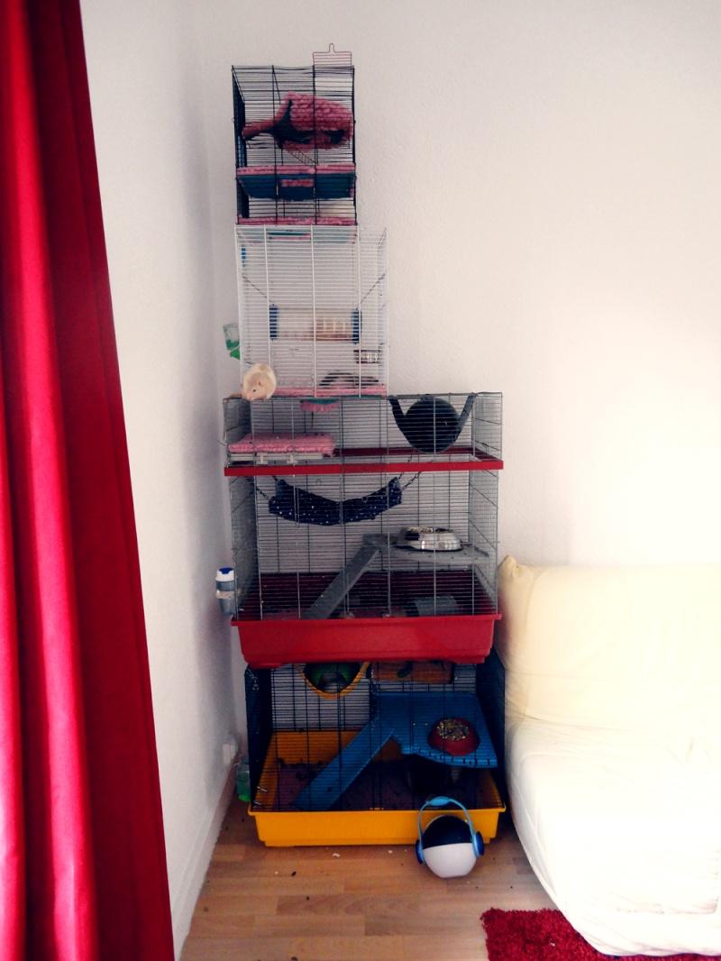 [13] A vendre 3 cages + DryBed et accessoires Dsc05410