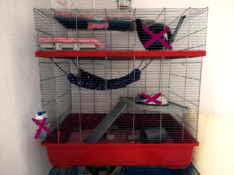 [13] A vendre 3 cages + DryBed et accessoires Dsc05412
