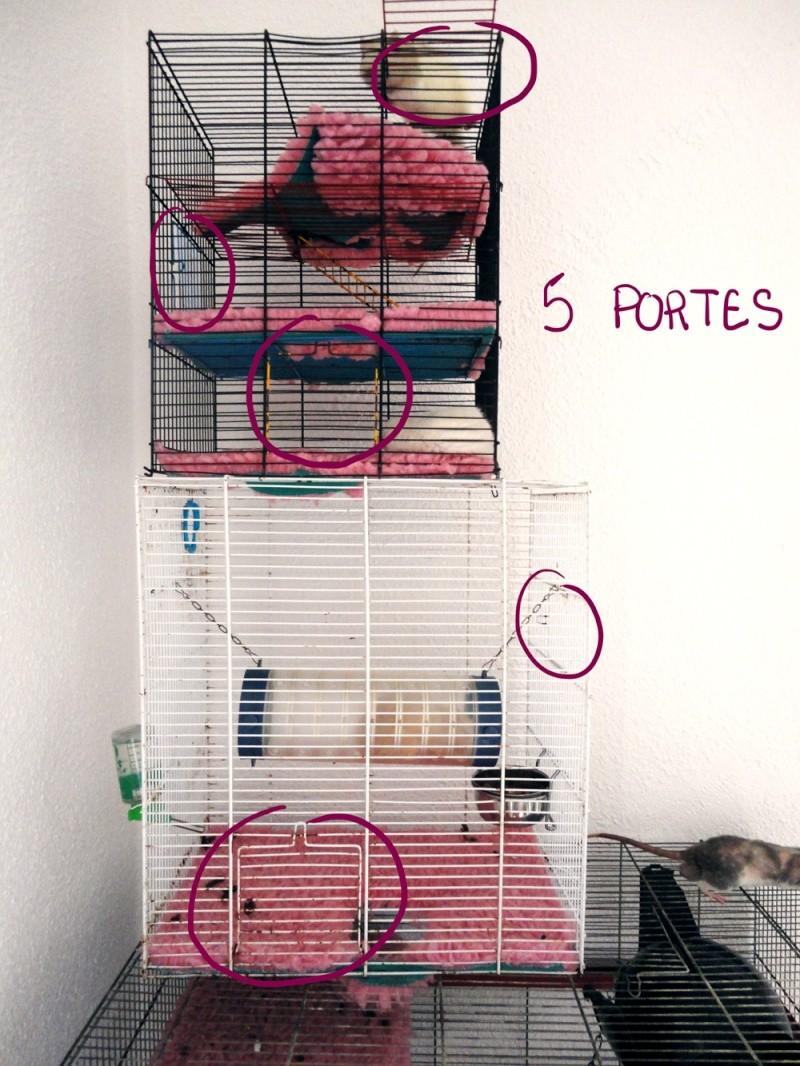 [13] A vendre 3 cages + DryBed et accessoires Dsc05413