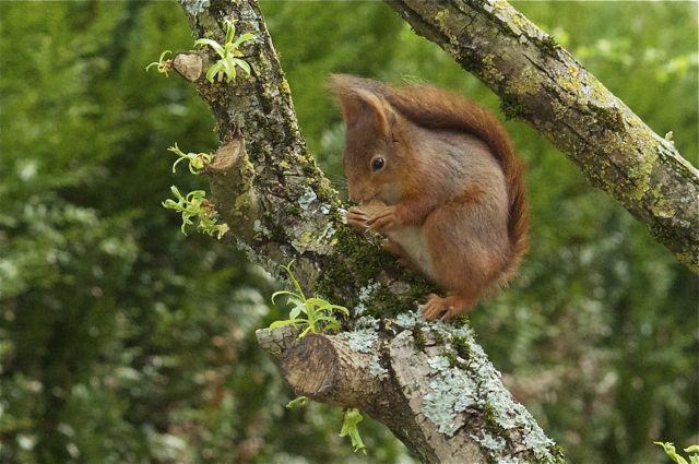 écureuil du jardin _dsc0810