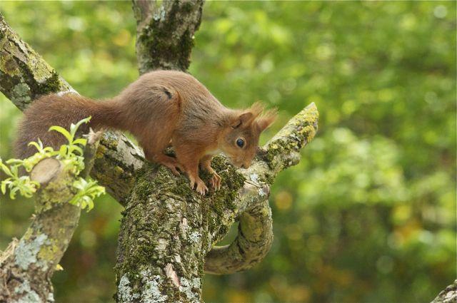 écureuil du jardin _dsc0910