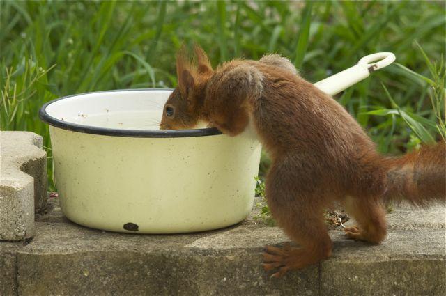 écureuil du jardin _dsc0911