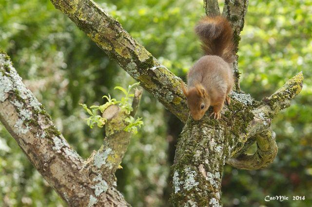 écureuil du jardin Acureu27
