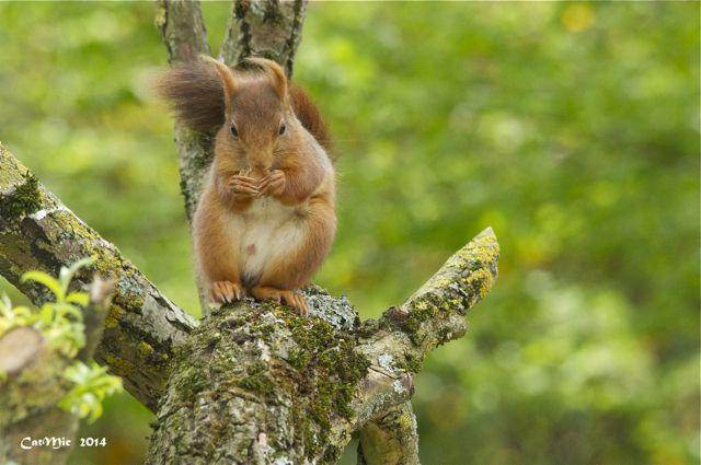 écureuil du jardin Acureu29