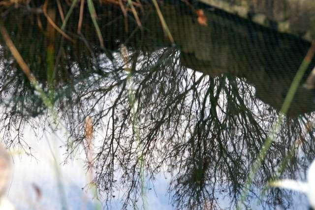 36 - Les reflets dans les flaques d'eau !!! Dsc01010