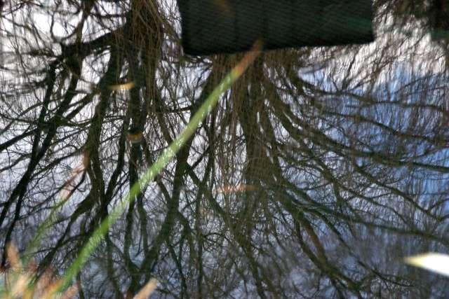 36 - Les reflets dans les flaques d'eau !!! Dsc01011