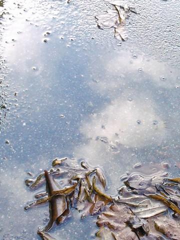 36 - Les reflets dans les flaques d'eau !!! Dsc_0012