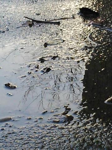 36 - Les reflets dans les flaques d'eau !!! Dsc_0013