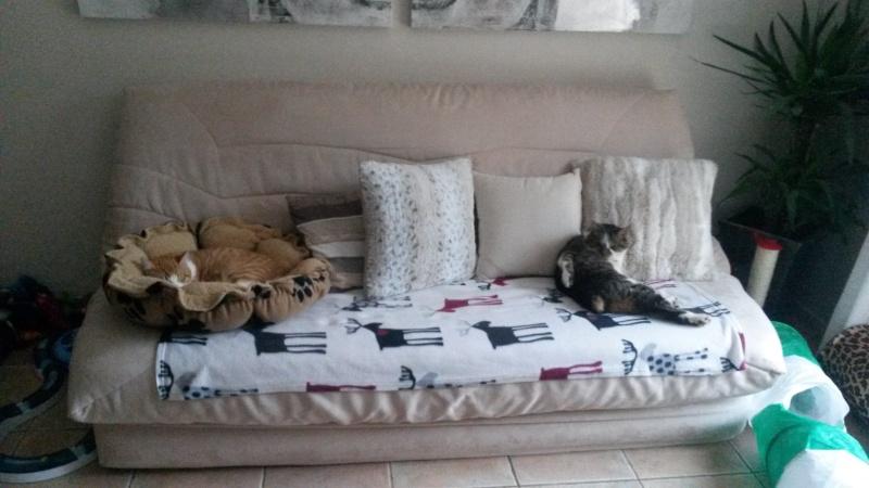 Entente entre vieux chat et chaton. - Page 2 20140112