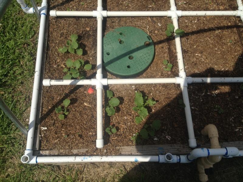 Green Juicing: Growing & Recipes Ideas Img_0219