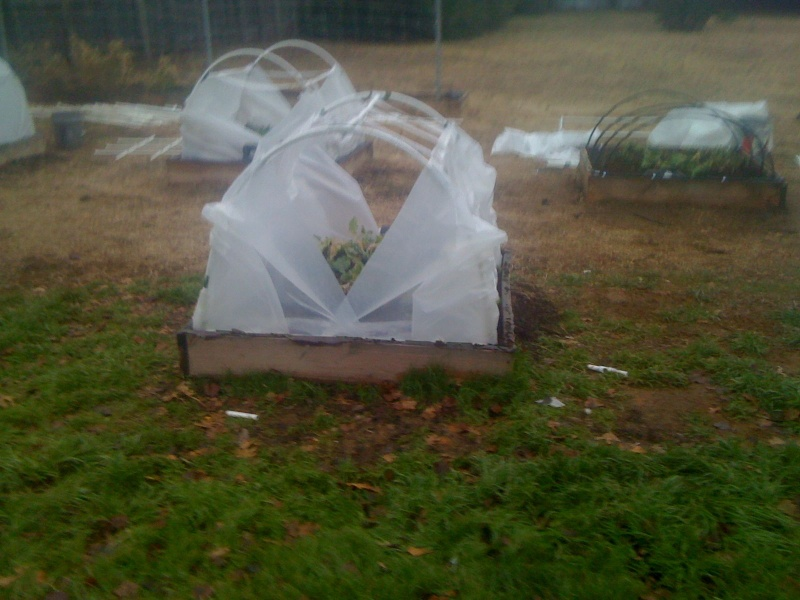 making a window in the low tunnel hoop house Sfg_be10