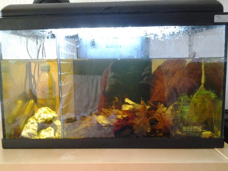 aquarium 55 litres 20131110