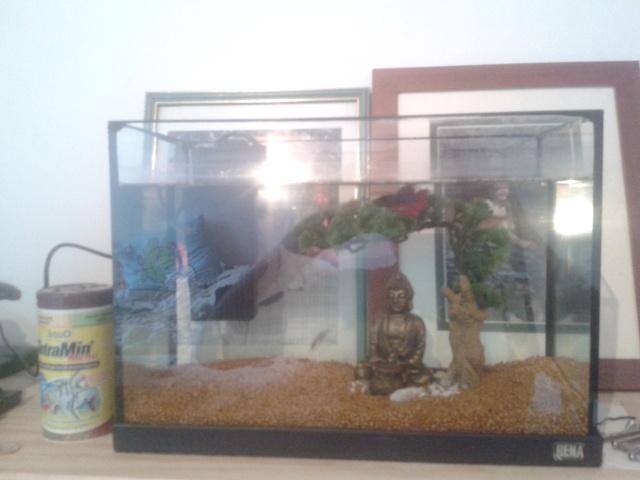 Mon aquarium 20L 20140512