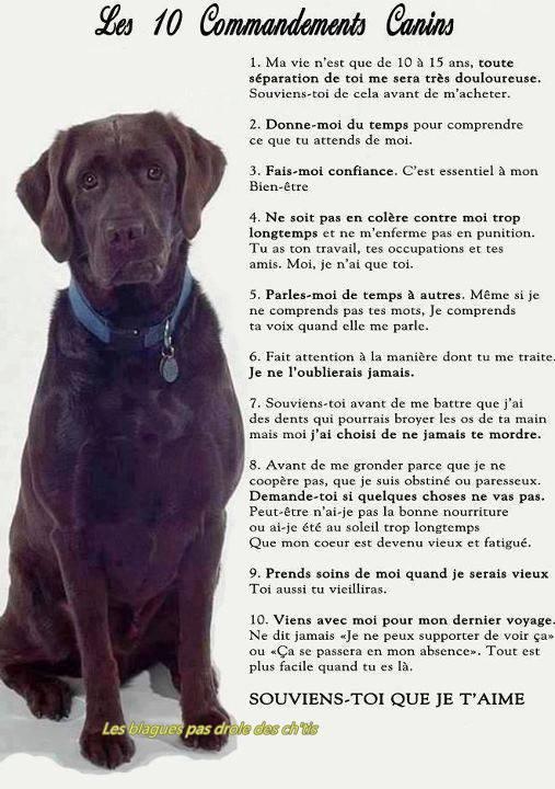 les 10 commandements canins Les_1010