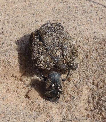 Mon bousier de Laghouat, Algérie. 065p10