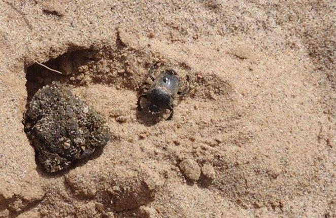 Mon bousier de Laghouat, Algérie. 073p11