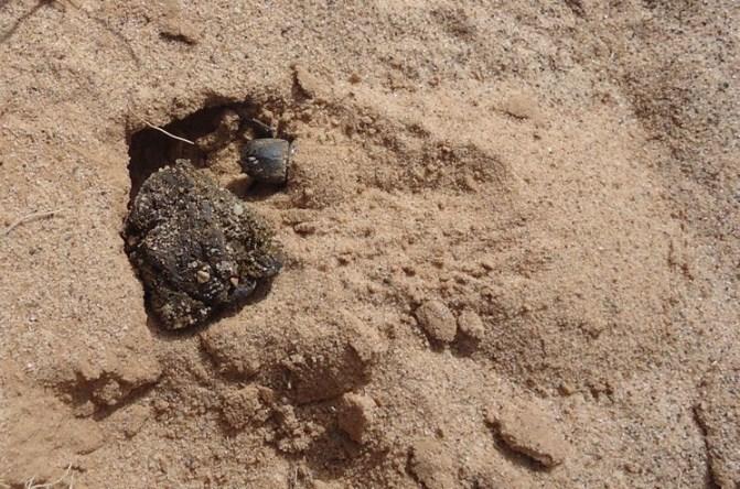 Mon bousier de Laghouat, Algérie. 074p10