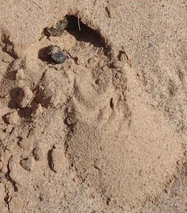 Mon bousier de Laghouat, Algérie. 080p10