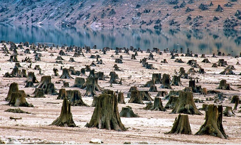 Que puis-je faire pour protéger l'environnement ? 813