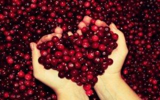 L'atout santé de la cranberry B14