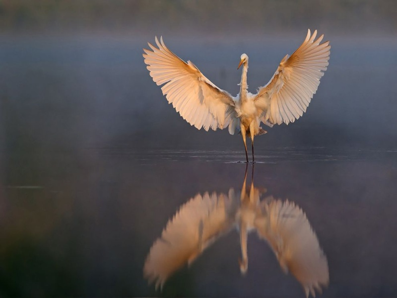 Spirituality Bird-m10