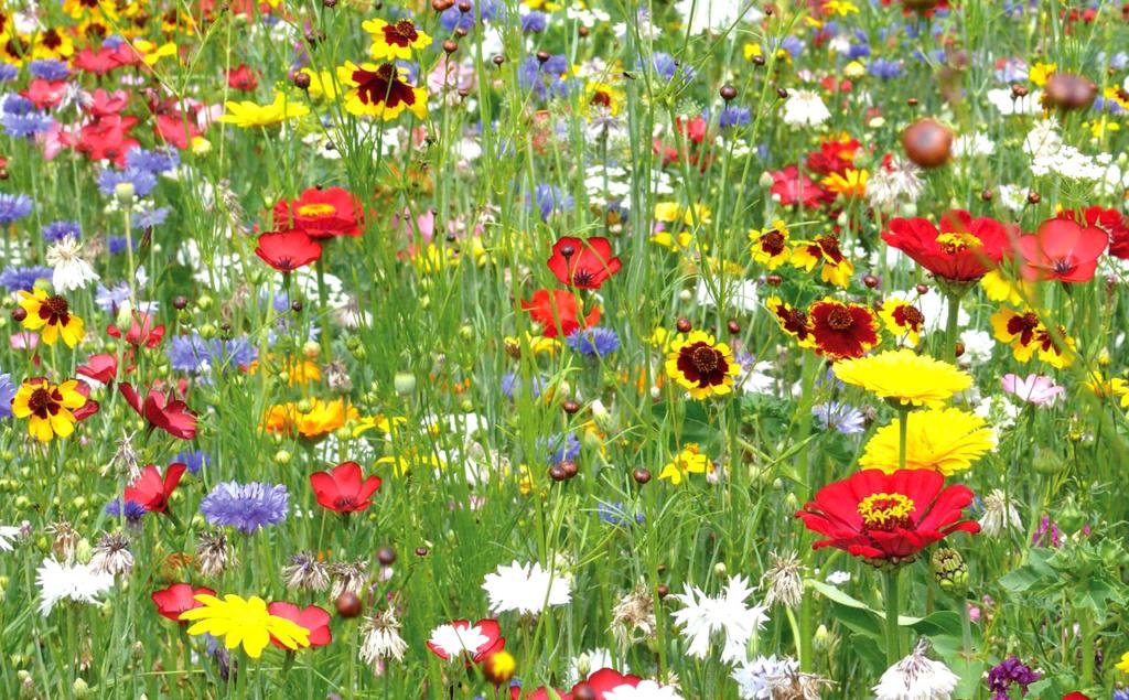 À propos du bonheur Fleurs10