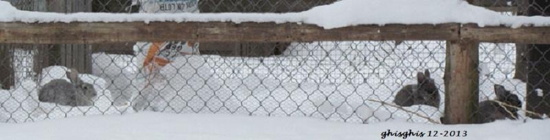 Lapin sauvage ou lièvre ? Img_7711