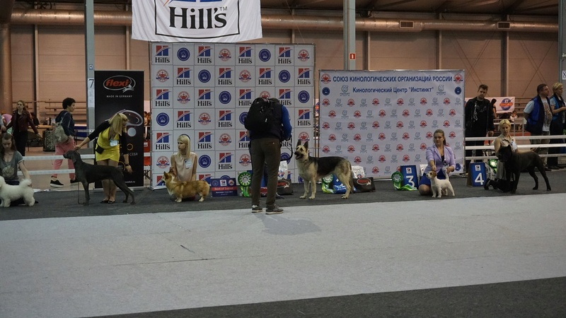 20-05-2017 Москва 2х-CACIB Чемпионат России*Континент Союз-2017 Dsc05420