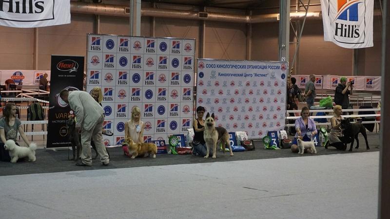 20-05-2017 Москва 2х-CACIB Чемпионат России*Континент Союз-2017 Dsc05421