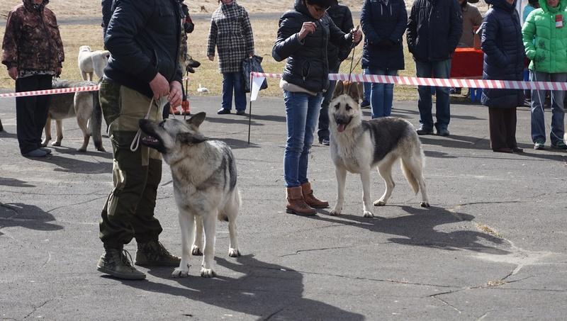 23 апреля Серебряный Апрель САС  + МОНО ВЕО  Dsc08211