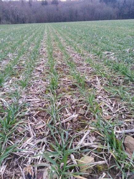 semis de blé 2013-2014 - Page 17 20131210
