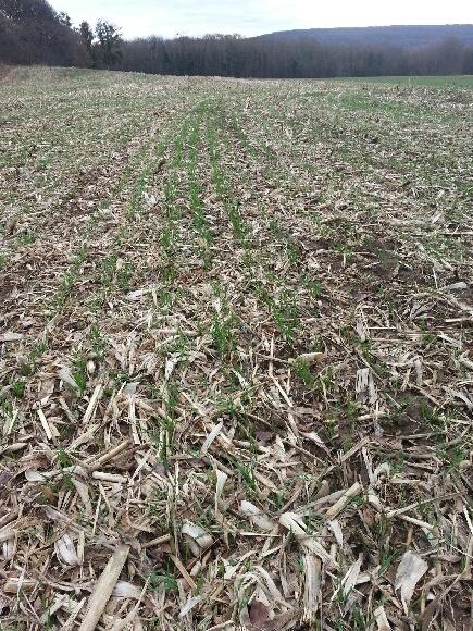 semis de blé 2013-2014 - Page 18 20140110