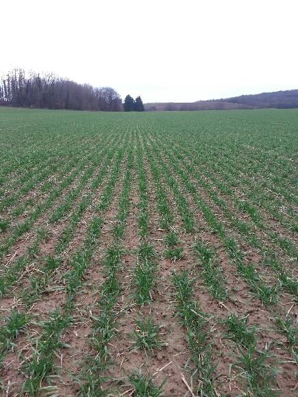 semis de blé 2013-2014 - Page 18 20140113