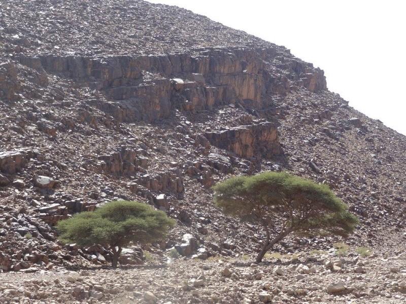 [Petites RANDOS pédestres] Site de gravures de Foum Chenna à partir de Tinzouline près de Zagora Dsc05114