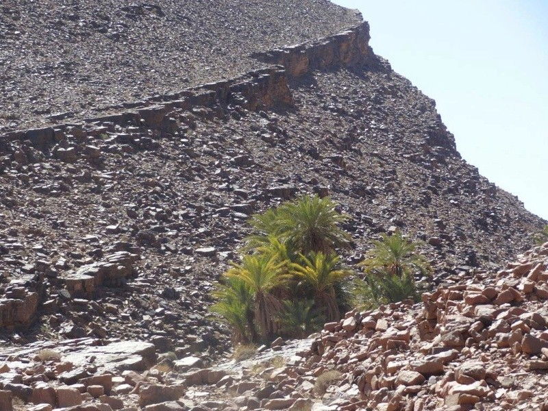 [Petites RANDOS pédestres] Site de gravures de Foum Chenna à partir de Tinzouline près de Zagora Dsc05115