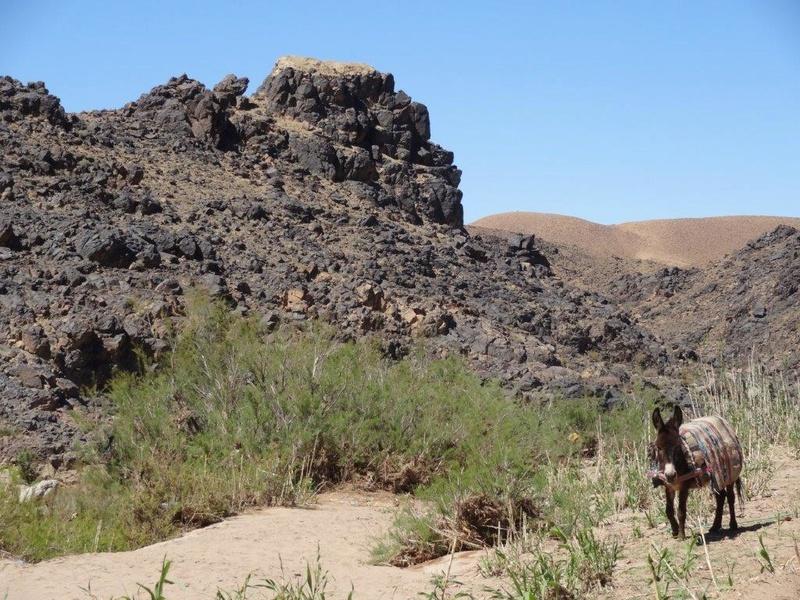 [Petites RANDOS pédestres] Sidi Flah près de Skoura  Dsc05612