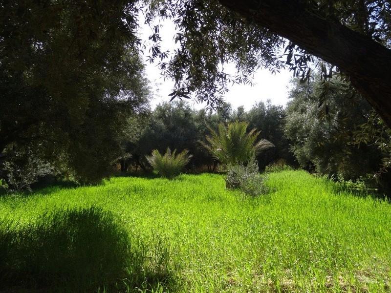 [Maroc Camp/Découverte] Camping Rekkam à Boudnib Dsc05712