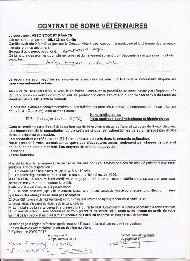 Mizy , carlin bringée noire femelle , une bouille d amour Reservée   - Page 3 A15