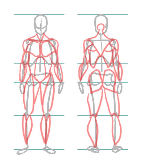 [Conseil] Les bases du dessin: Le corps humain Tuto_c15