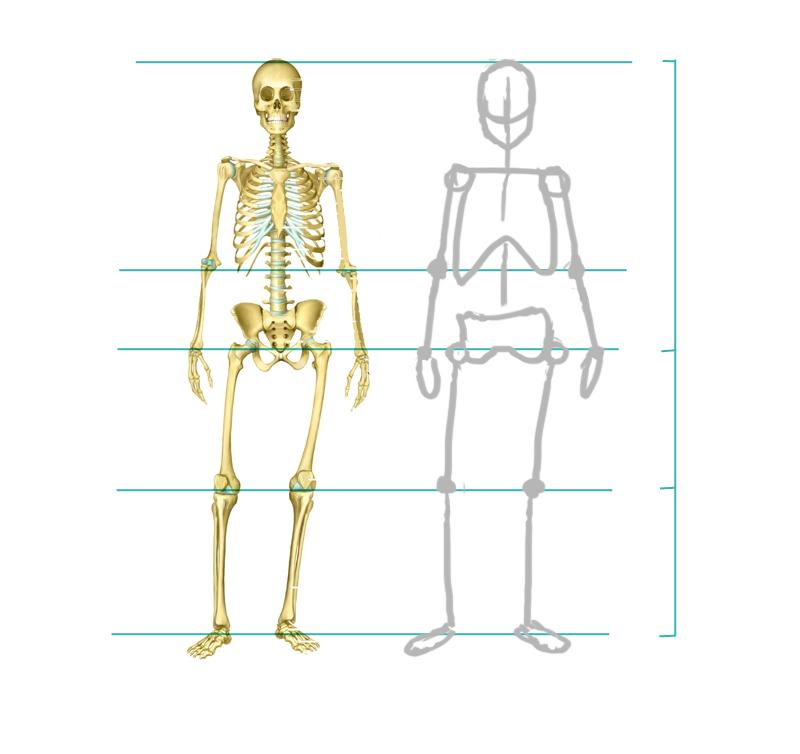 [Conseil] Les bases du dessin: Le corps humain Tuto_c16