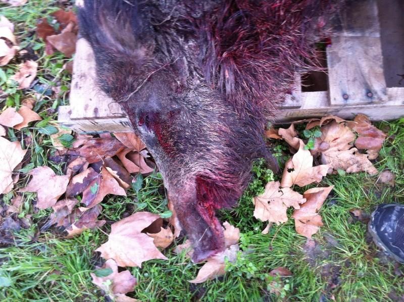 Saison de chasse au Grand Gibier 2013/2014 - Page 15 Sangli11