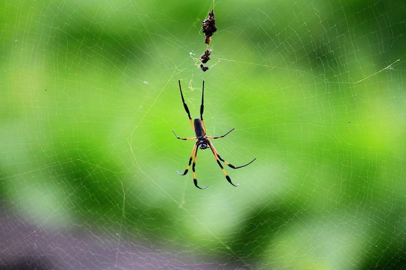(FIL OUVERT à tous) vous aimez les araignées? - Page 5 Img_7915