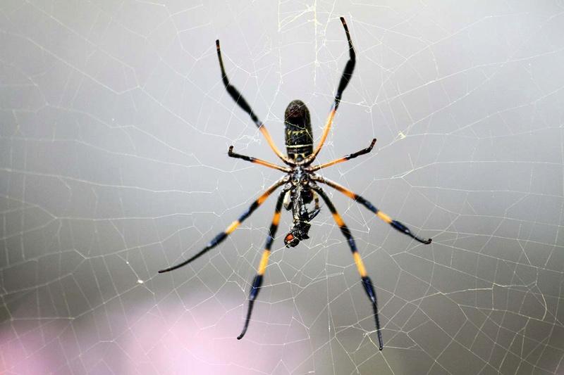 (FIL OUVERT à tous) vous aimez les araignées? - Page 5 Img_8010