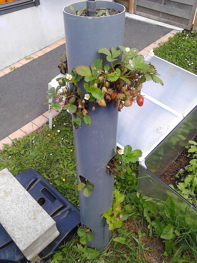 Que se passe t'il au jardin? - Page 2 Img_2010