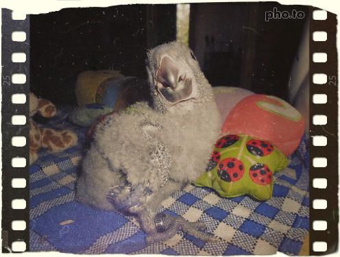 Holy, mon perroquet de jardine 6c0c2c10