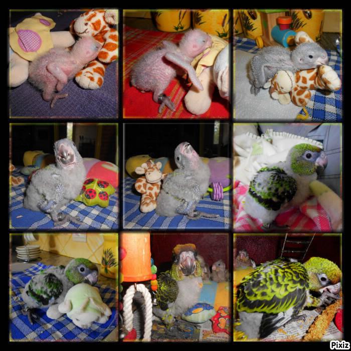 Holy, mon perroquet de jardine Pixiz_10