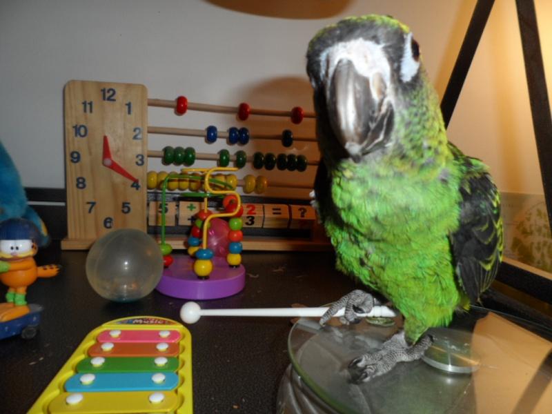 Holy, mon perroquet de jardine Sam_0410