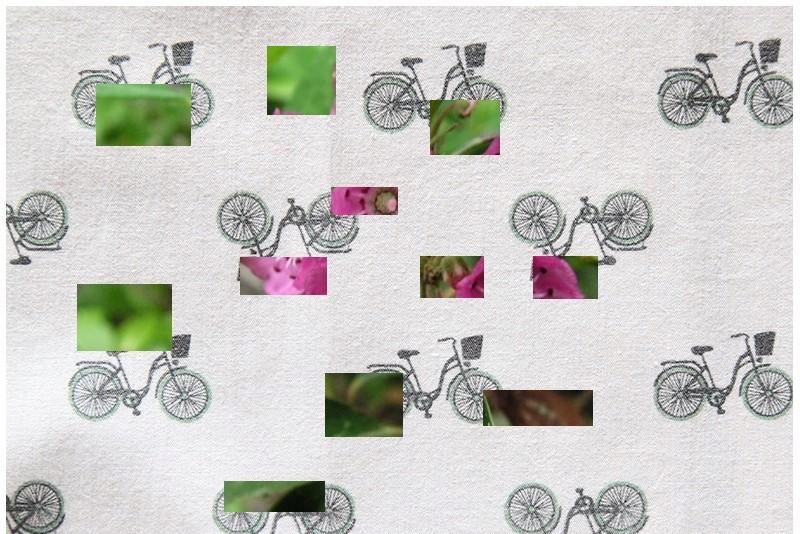 Petit Arbuste de Martine 8/05 trouvé par Snoopie Plante15