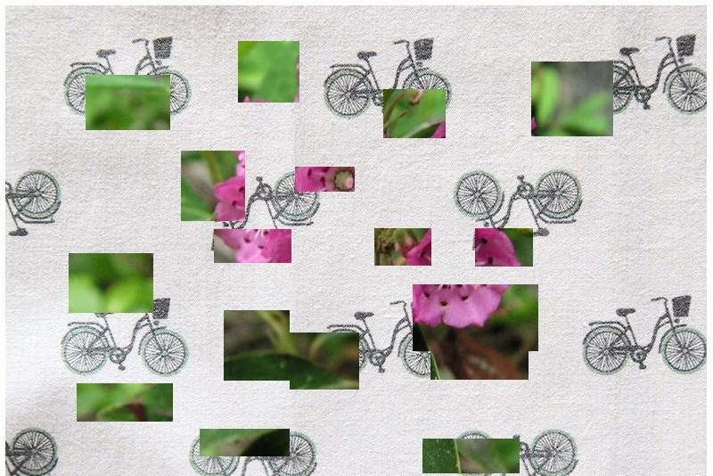 Petit Arbuste de Martine 8/05 trouvé par Snoopie Plante16